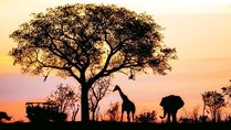 Alumni Travel: South Africa